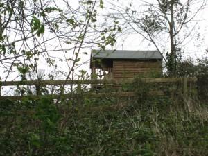 Little log cabin in someone's back yard