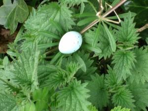 Birds Egg